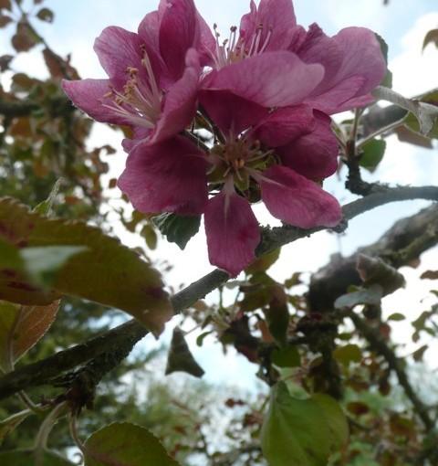Om träd – iakttagelser och erfarenheter från Ingrid Persson